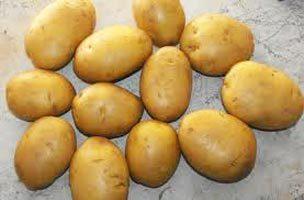 Potato in  M.G. Road