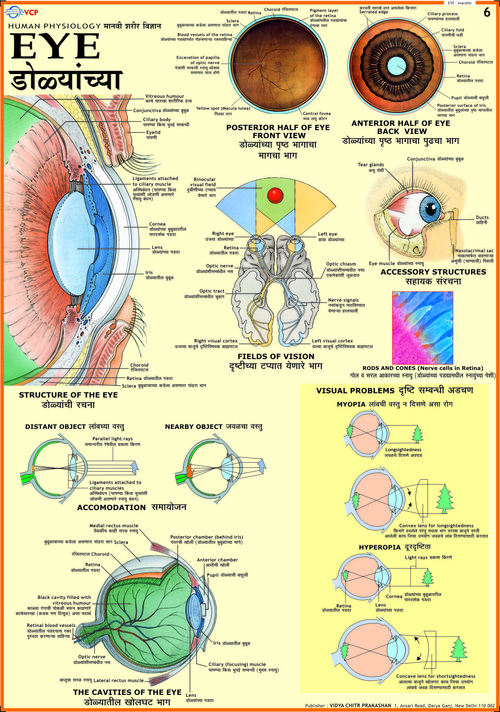Educational charts in delhi delhi india vidya chitr prakashan educational charts in ansari road malvernweather Choice Image