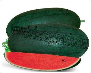King Watermelon Seeds