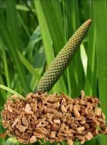 Calamus Root Oil