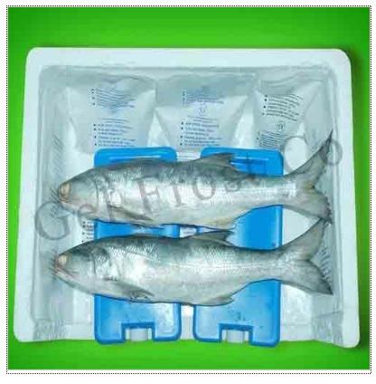 Sea Food Ice Pack