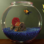 Glass Bowl Shape Aquarium