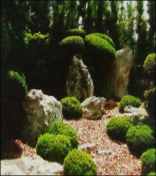 Medicinal & Aromatic Planting Service