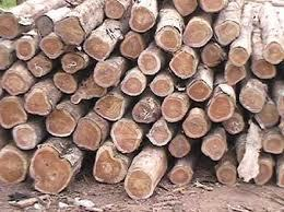 Teak Wood Logs in   Ollur