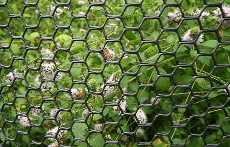 Gardening Fence