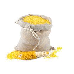 High Grade Yellow Maize in   Nr. Raksha Shakti Circle