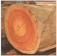 Red Meranti Log Wood