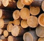 Pine Wood Round Logs in   MITHI ROHAR