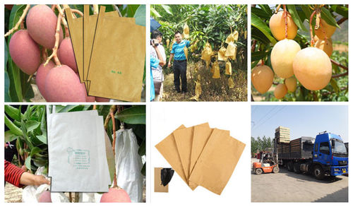 Mango Growing Bag