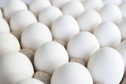 Poultry Eggs in  Dadar (W)