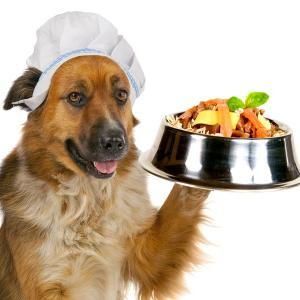 Pet Food For Dogs