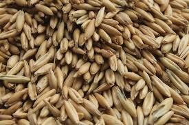 Fodder Seed