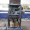Rugged Cashew Nut Cutting Machine