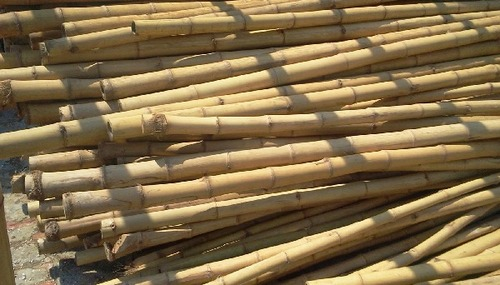 Bamboo poles manufacturers dealers exporters