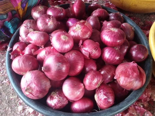 Fresh Red Onion in   Waghawadi Road