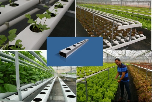 Hydroponic Nft Systems For Greenhouse Vegetable Production