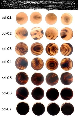 Buffalo Horn Buttons Blanks