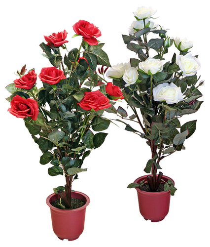 Rose plant in gandevi navsari manufacturer - Planting rose shrub step ...