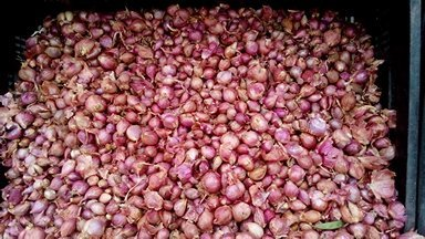 Small Onion in  Trustpuram