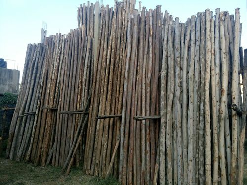 Bamboo poles manufacturers suppliers exporters