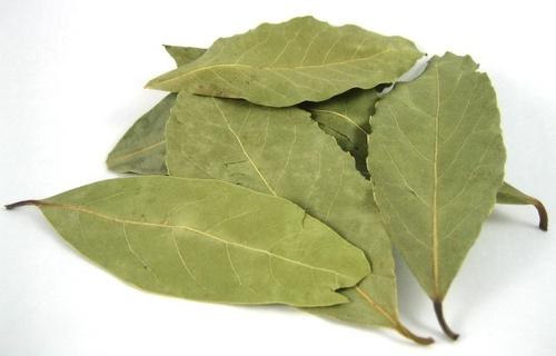 Laurel Bay Leaf