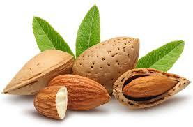 Almonds Nuts in  Sector-19-Vashi