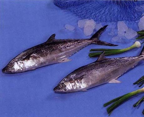 seer fish indian manufacturers suppliers amp exporters
