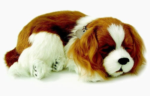 Cavalier King Charles Soft Toy in  Pitampura
