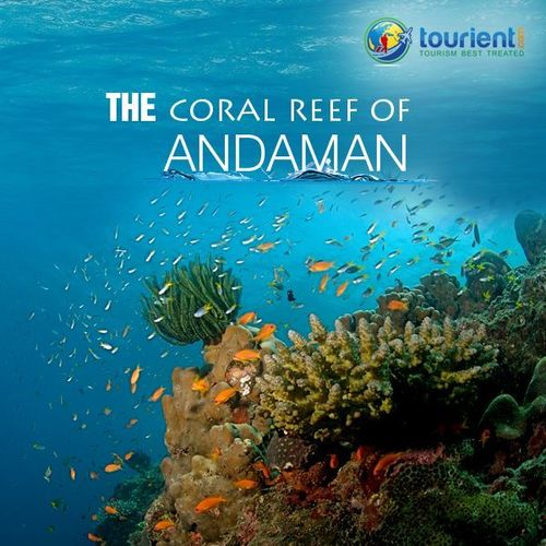 Andaman Tour Package Services in  S.G.Road