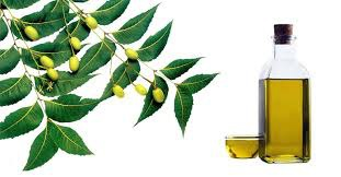 Neem Oil in  Meerut Cantt.