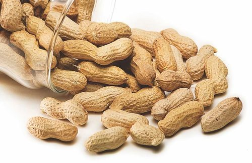 Groundnut in  Saibaba Colony