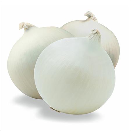 Onion Dried Powder