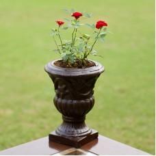 Royal Rose Plant