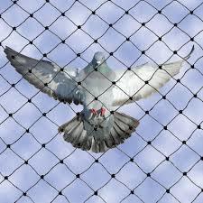 Anti Pigeon Nets