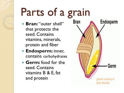 Packaged Wheat Seeds in   Distt:-U.S.Nagar