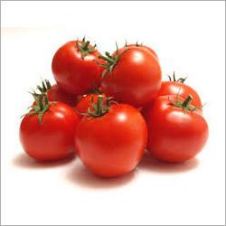 Fresh Tomato in   Arachalur