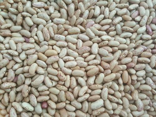 Chitra Beans