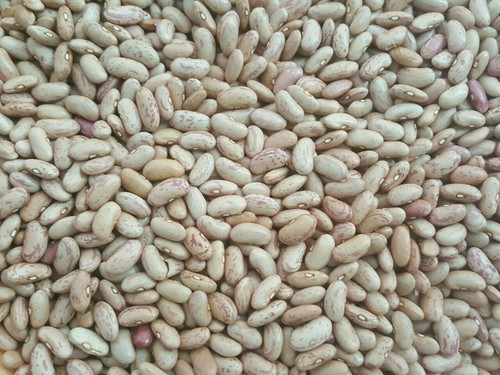 Chitra Beans in   MARKET YARD