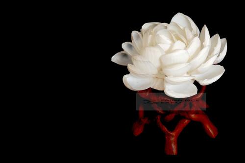 Seashell Decorative Flowers