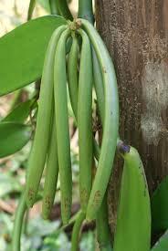 Vanilla Extract in   Bogmalo Beach Road