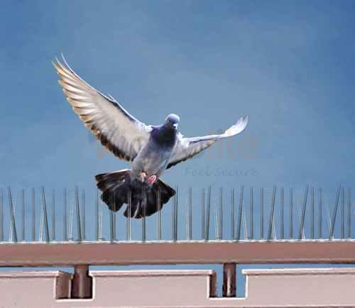 Bird Wall Spikes in  Raja Garden