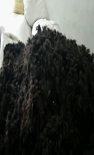 Human Goli Hair in   P.S. - Beldanga