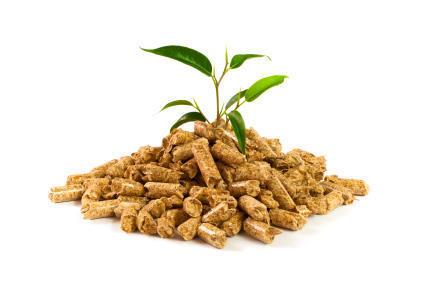 Biomass Wood Pellet in  Bodakdev