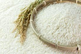 Premium Rice in  Nerul
