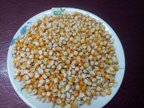 White Maize Corn in  Prahlad Nagar