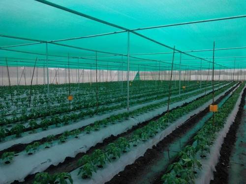 Farm Shade Nets