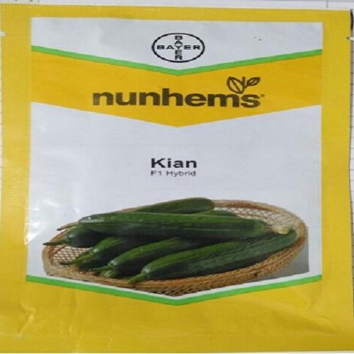 Nunhems Kian F1 Cucumber Seeds in  Varachha