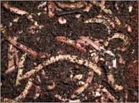 Vermicompost Manure in   Carpet City BIDA Bhadohi