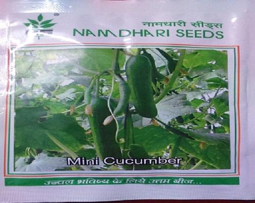 NS 499 (KUK 9) Cucumber Seed in  Varachha
