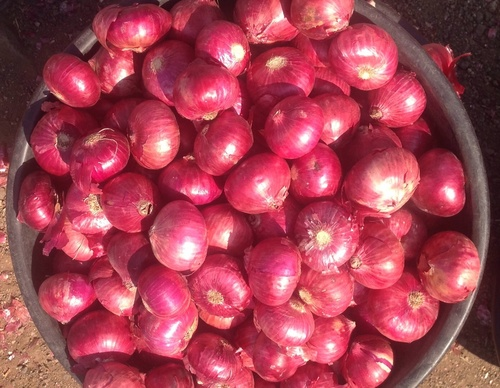 Organic Red Onion in   Waghawadi Road